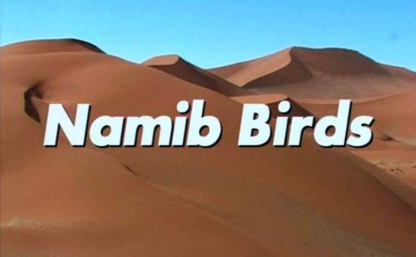 Namib Birds